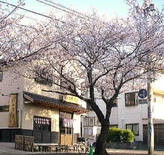 gaikansakura1.jpg