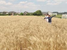 小麦を本質から理解するために [収穫]