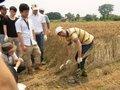 小麦収穫研修です