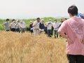 素材を学び、理解を深める「小麦栽培」