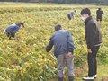 京都・丹波への大納言収穫研修に行ってきました